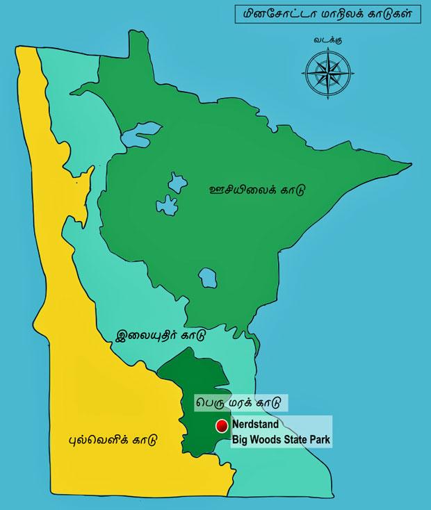 நேர்ஸ்ராண்ட பெருமரக்காடு
